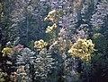 Foothill Greens 2020 - Flickr - wildrosetn39.jpg