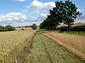 Footpath alongside wheatfield - geograph.org.uk - 497558.jpg