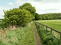 Footpath from Keepers Lane to Notton Park. Woods - geograph.org.uk - 430899.jpg