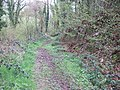 Footpath in the woods at Eggesford - geograph.org.uk - 162525.jpg