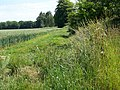 Footpath near Grittleton - geograph.org.uk - 1381003.jpg