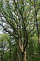 Forêt domaniale de Bois-d'Arcy 49.jpg