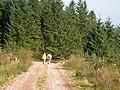 Forest Walk - geograph.org.uk - 261834.jpg
