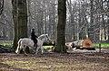 Forest activities at Hoge Erf Schaarsbergen - panoramio.jpg