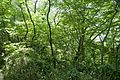 Forest in Mt.Nandai 06.jpg