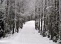 Forest trail in Põhja-Kõrvemaa, 2011-01.jpg