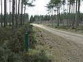 Forestry track junction - geograph.org.uk - 372000.jpg