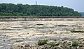 Fossiliferous limestone (Jeffersonville Limestone, Middle Devonian; Falls of the Ohio, southern Indiana, USA) 19 (33325053912).jpg