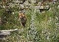 Fox (125523875).jpeg