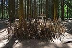 Foxholes - Bois Jacques - Bastogne - 09.jpg