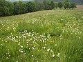 Frühlingswiese - panoramio.jpg