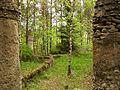 Fragment pozostałości po zapomnianych ogrodach w Płocicznie.jpg