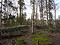 France Petit-Ringelstein north wall from inside.jpg