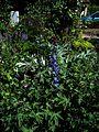 Front garden - Flickr - peganum (17).jpg