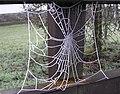 Frozen Web, Knockgreenan, Omagh - geograph.org.uk - 1063003.jpg