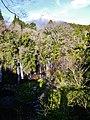 Fujinomiya Shiraito-Wasserfall & Fuji-san 3.jpg