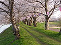 Fukuokadamsakurapark.jpg