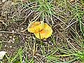 Fungi - geograph.org.uk - 236105.jpg