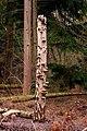 Fungi covered tree trunk in York's Wood - geograph.org.uk - 1733047.jpg