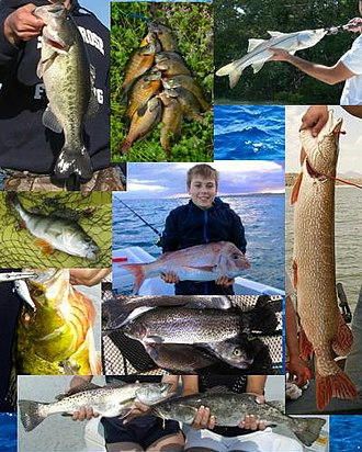 Game fish - A few popular game fish around the world.