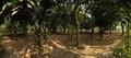 Garden - Prayas Green World Resort - Sargachi - Murshidabad 2014-11-29 0191-0195.TIF