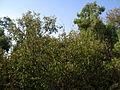 Garden Way - Wall - trees - streamlet - 17 Shahrivar st - Nishapur 26.JPG