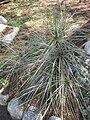 Gardenology.org-IMG 2356 hunt0903.jpg