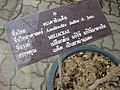 Gardenology.org-IMG 7813 qsbg11mar.jpg