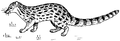 Genet (PSF).png