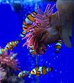 Genoa - Aquarium 15.jpg