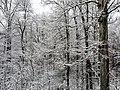 Georgia snow IMG 4616 (38060589325).jpg