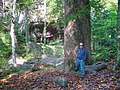 Giant Tulip Poplar East Bee Branch - panoramio.jpg