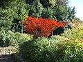 Giardino delle rose 12.JPG
