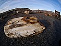 Ginkgo Petrified Forest State Park near Vantage along the Columbia River.jpg