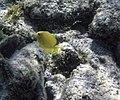 Glover's Reef 2-14 (32989764041).jpg