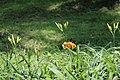 Godawari Botanical Garden 1478963.jpg