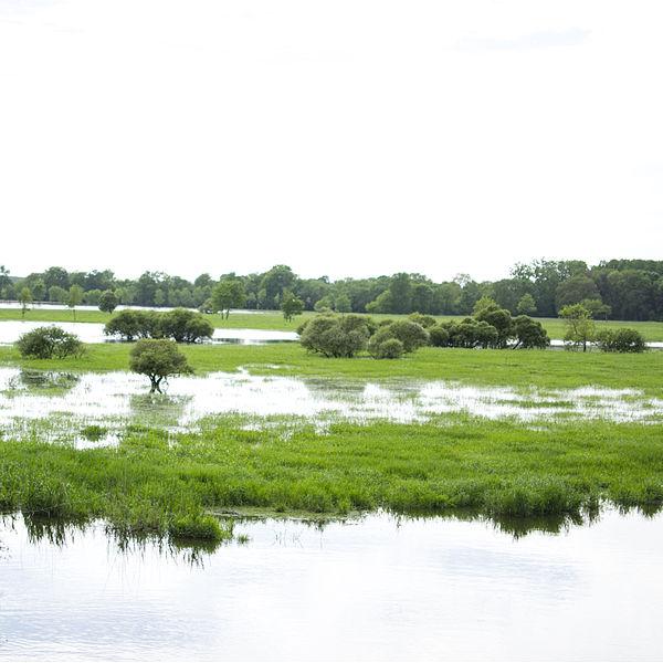 Roselière du Lac de Grand-Lieu