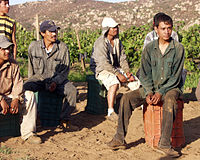 Grape workers.jpg