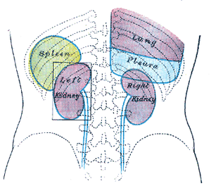 Back of lumbar region, showing surface marking...