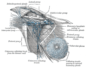 Lymphatics of the axillary region