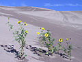 Great Sand Dunes National Park and Preserve P1012959.jpg
