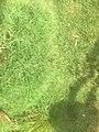 Green Grass 001.jpg