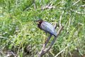 Green Heron-Estero Llano Grande SP-TX - 2015-05-08at13-56-23 (21421717539).jpg