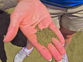 Green sand beach.JPG