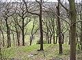 Grimescar Wood, Fixby - geograph.org.uk - 382165.jpg