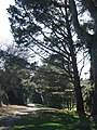 Grounds, University of Exeter - geograph.org.uk - 696480.jpg