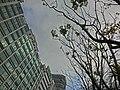 HK 觀塘 Kwun Tong 海濱道公園 Hoi Bun Road Park LCSD Dec-2013 trees view 新昌中心 Hsin Chong Centre Wai Yip Street.JPG