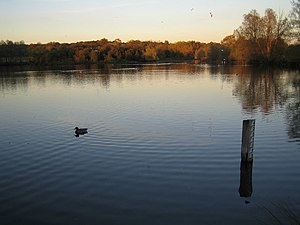 Hainault Forest - The large lake in Hainault Forest Country Park