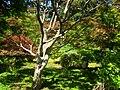 Hakone Gardens, Saratoga, CA - IMG 9159.JPG