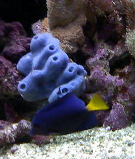 species of sponge